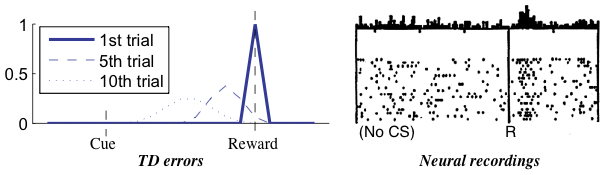 Reward prediction errors are high when first encountered, but diminish over time. [Niv, 2009]